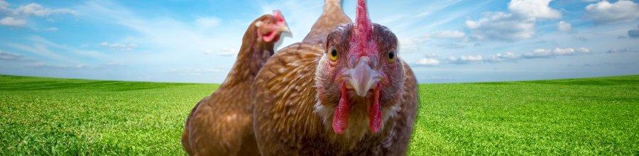 Delmarva Poultry Fanciers